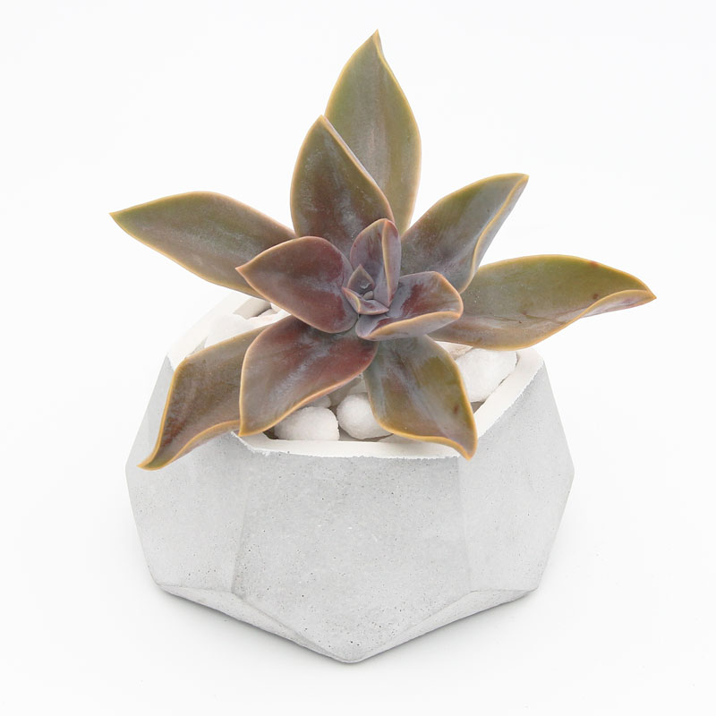 Son Concrete Planter White with Succulent top view