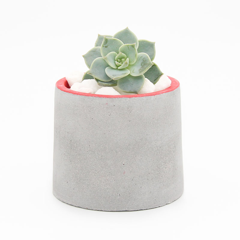 Volmaan Concrete Planter Red with Succulent front view